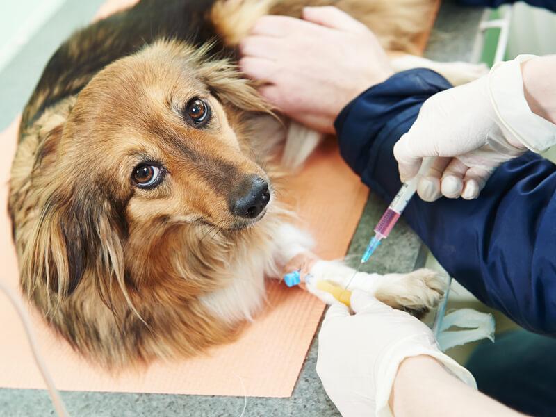 vaccinazione veterinario a domicilio
